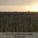 Le Mont Saint Michel dans le soleil couchant …