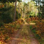Portrait en Forêt de Brocéliande